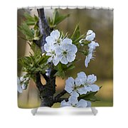 Cherry Blossoms In White Shower Curtain