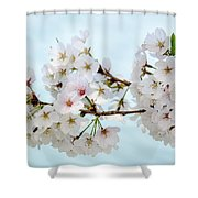 Cherry Blossoms No. 9146 Shower Curtain
