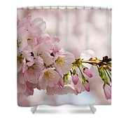 Cherry Blossoms No. 9164 Shower Curtain