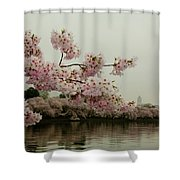 Cherry Blossoms On A Foggy Morning Shower Curtain
