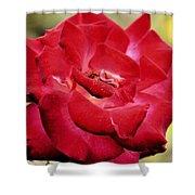 Cherry Cream Rose Shower Curtain