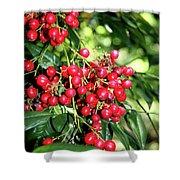 Cherry Laurel  Shower Curtain