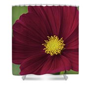 Cherry Petals Shower Curtain