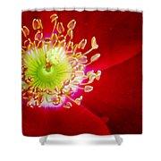 Cherry Pie Rose 01a Shower Curtain