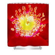 Cherry Pie Rose 02a Shower Curtain