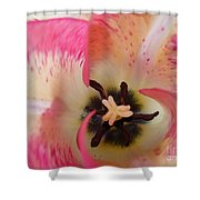 Cherry Pink Swirl Shower Curtain