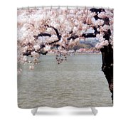 Cherry Tree And The Potomac Shower Curtain