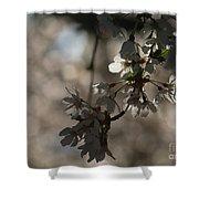 Cherry Tree Blossom Macro Shower Curtain