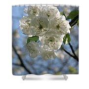 Cherry Tree Petals Shower Curtain