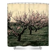 Cherry Trees 2.0 Shower Curtain