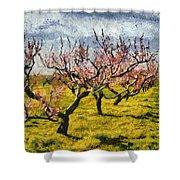 Cherry Trees 3.0 Shower Curtain