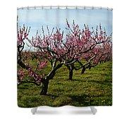 Cherry Trees Shower Curtain