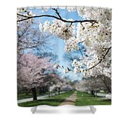 Cherry Trees Shower Curtain