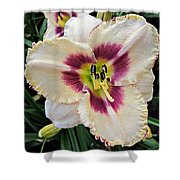 Cherryberry Daylily Shower Curtain