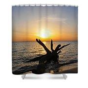 Chesapeake Bay Driftwood At Sunset Shower Curtain