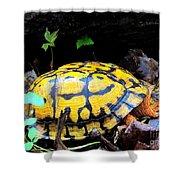 Chesapeake Box Turtle Shower Curtain