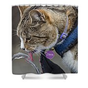 Chester At The Drinking Fountain Shower Curtain