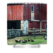 Chester County Chickens Shower Curtain