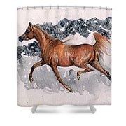 Chestnut Arabian Horse 2014 11 15 Shower Curtain