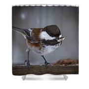 Chestnut Back Chickadee In Winter Shower Curtain