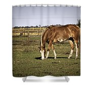 Chestnut In The Pasture Shower Curtain