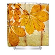Chestnut Leaves At Autumn Shower Curtain