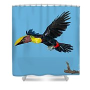 Chestnut-mandibled Toucan Shower Curtain