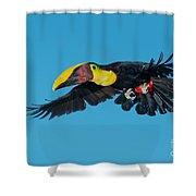 Chestnut-mandibled Toucan Flying Shower Curtain