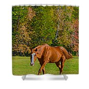 Chestnut Red Horse Shower Curtain