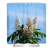 Chestnut Tree Blossoms - Featured 2 Shower Curtain