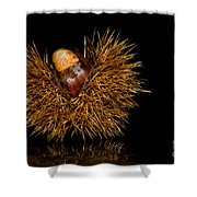 Chestnuts Shower Curtain