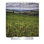 Chianti Region Of Tuscany Shower Curtain