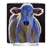 Chiaroscuro Calf Shower Curtain