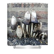 Chicago Alley Shrooms Shower Curtain