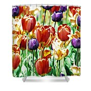 Chicago Tulips Shower Curtain