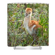 Chick 107 Shower Curtain