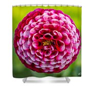 Chick A Dee Dahlia Shower Curtain