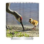 Chick At The Lake Shower Curtain