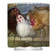 Chick Trio  Shower Curtain