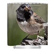 Chickadee Bringing Lunch To The Kids Shower Curtain