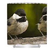 Chickadee Dee Dee Shower Curtain by Jean Noren