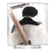 Chickadee-img-2147-001 Shower Curtain