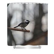 Chickadee - Keeping Watch Shower Curtain