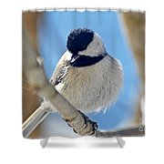 Chickadee On A Bright Day  Shower Curtain