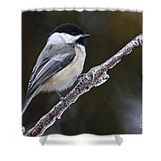 Chickadee Pictures 228 Shower Curtain