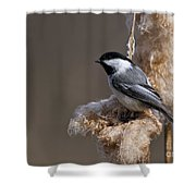 Chickadee Pictures 261 Shower Curtain