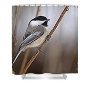 Chickadee Pictures 316 Shower Curtain