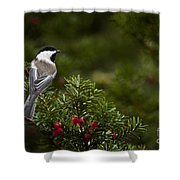 Chickadee Pictures 373 Shower Curtain
