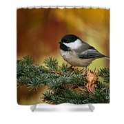 Chickadee Pictures 375 Shower Curtain