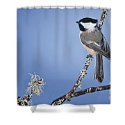 Chickadee Pictures 409 Shower Curtain